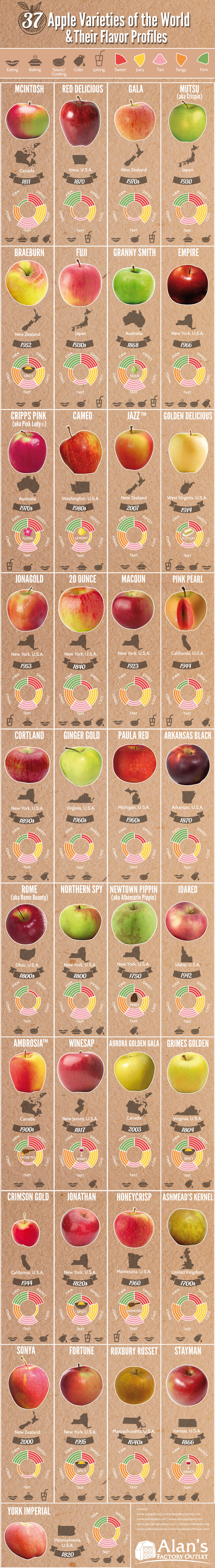 Flavour Guide of Best Known Apple Varieties - Infographic