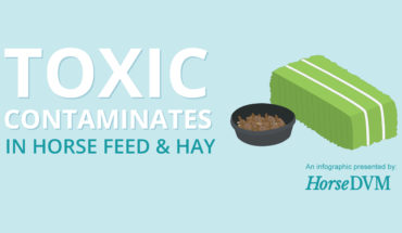 How Horse Hay and Feed Gets Contaminated - Infographic