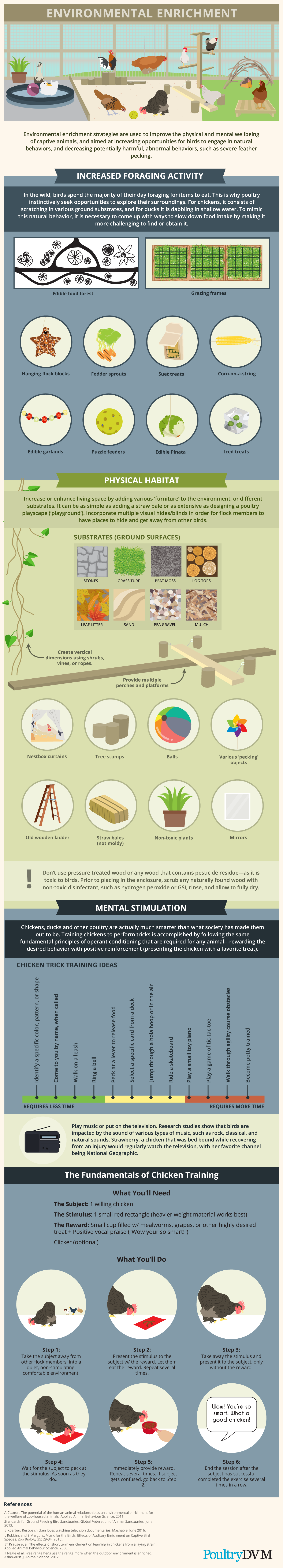 How to Create an Enriched Environment for Captive Birds - Infographic