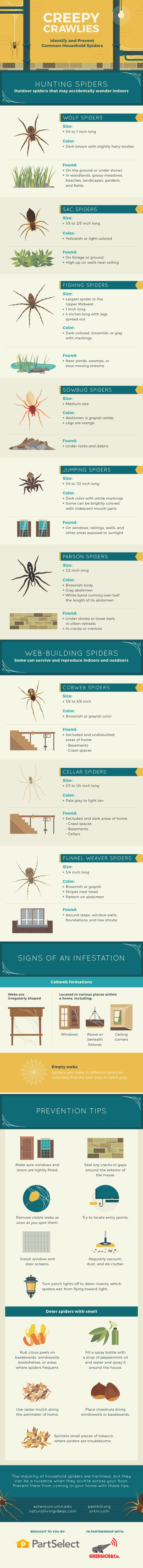 How to Keep Creepy Spiders Out of Your Home - Infographic