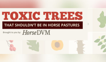 How to Make Your Horse Pasture Free of Toxics - Infographic