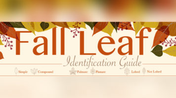 Know the Leaves that Fall in Autumn - Infographic