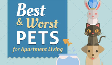 What's the Best Pet for Your Apartment - Infographic