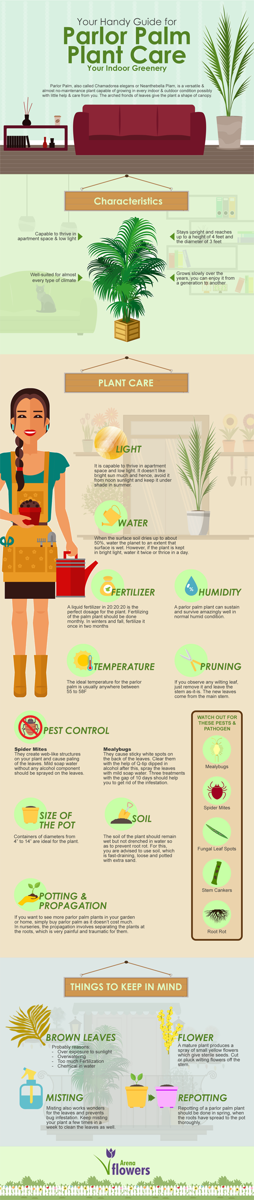 How to Care for Your Parlor Palm - Infographic