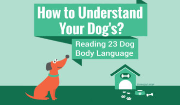 Understanding Your Dog's Body Language - Infographic