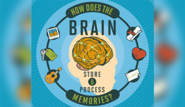 The Human Brain: Our Memory Processing and Storing Super-Computer - Infographic