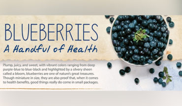 Blueberries: Plump and Powerful Nutrition Dynamites - Infographic