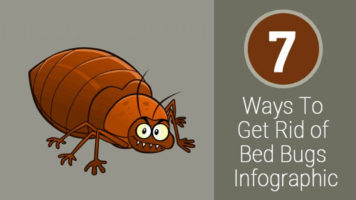 7 Practical Methods to Eradicate Bedbugs - Infographic