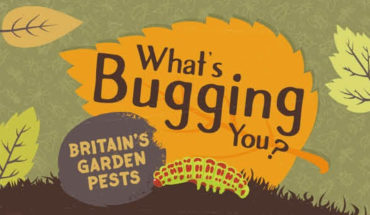 How to De-Bug Your Garden - Infographic