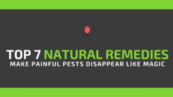 Keep Your Home Pest-Free the Natural and Harmless Way - Infographic