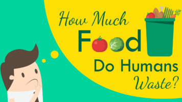 The Battle to Stop Food Wastage and Eradicate Hunger - Infographic