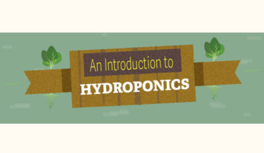 The Ultimate Guide to Hydroponic Gardening - Infographic