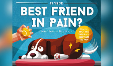 How to Manage Arthritic and Joint Pain in Large Dogs - Infographic