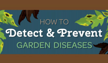 Blight & Rot: Recognizing and Preventing Garden Diseases - Infographic