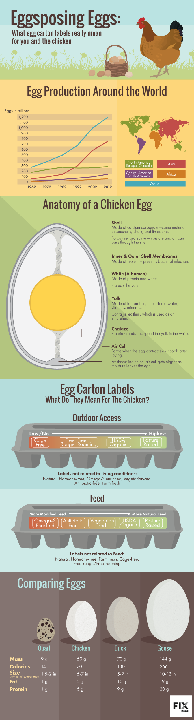 Eggsposé: The True Meaning of Egg Carton Labels - Infographic