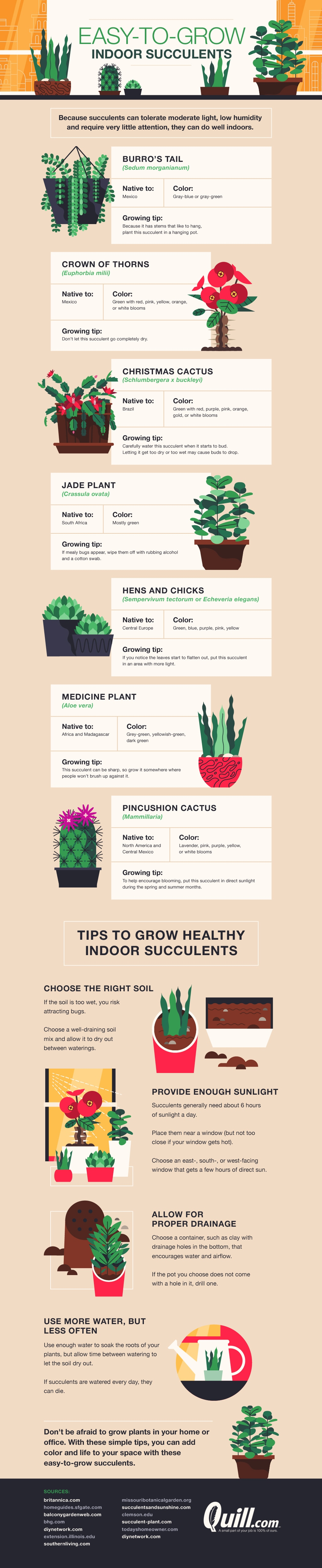Indoor Succulents: How to Nurture Them - Infographic
