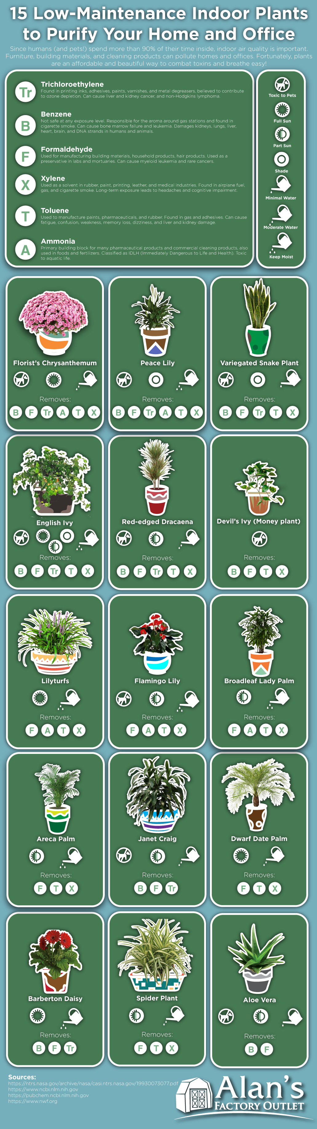 Plants that Purify: 15 Indoor Plants that Clean the Air at Home or Office - Infographic