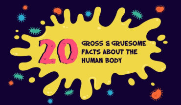 All About the Gruesome (or Awesome!) Human Body: 20 Amazing Facts - Infographic