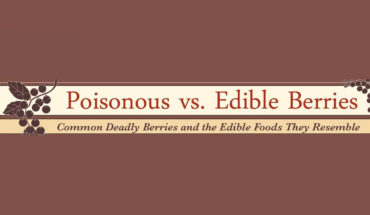 Berries: Edible vs poisonous - Infographic