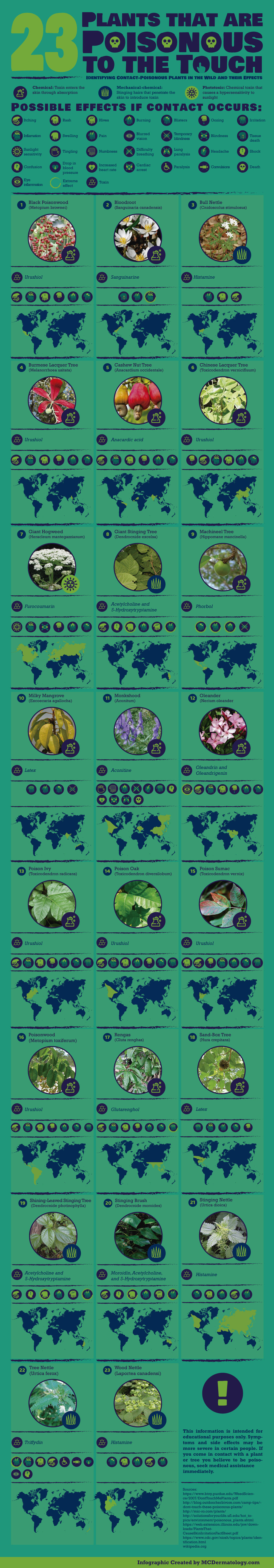 How to Identify and Stay Safe from Contact-Poisonous Plants - Infographic