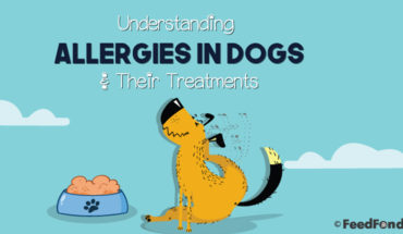How to Recognize Allergies in Dogs and Possible Causes & Treatments - Infographic