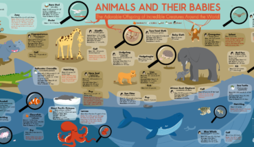 Names Of Animal Babies - Infographic