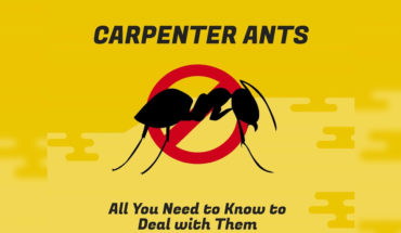 The Blight of Carpenter Ants and How to Get Rid of Them - Infographic