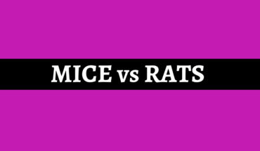 Telling the Difference Between Mice and Rats - Infographic