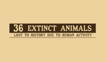 Chronicle of Loss: 36 Animals that Became Extinct Due to Human Actions - Infographic