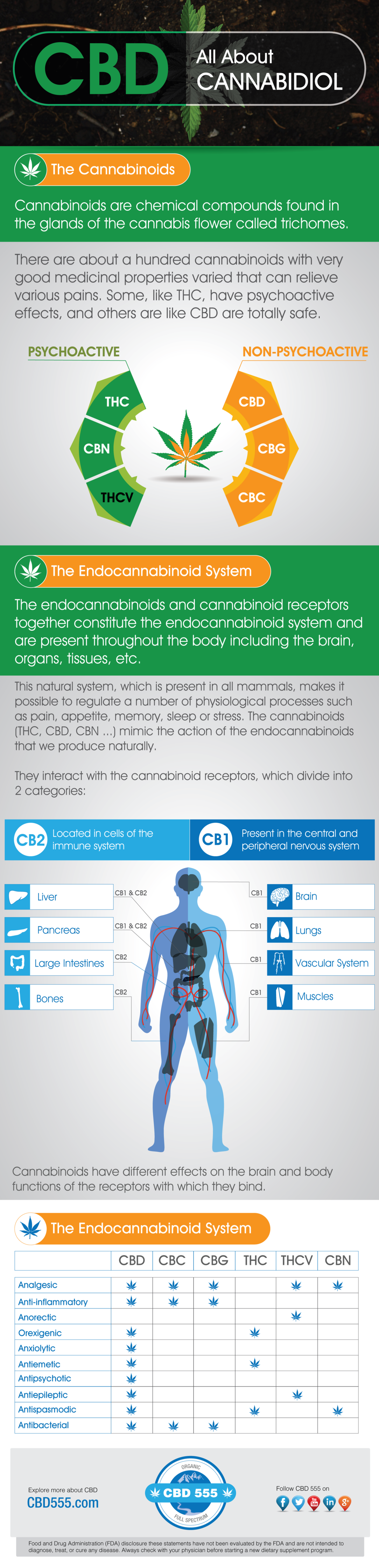 Demystifying Cannabidiol and Cannabinoids - Infographic