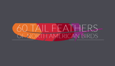 Master Identification Chart of 60 North American Birds' Feathers - Infographic