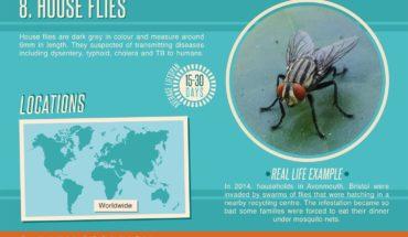 Nightmarish Invasions: 15 Worst Infestations Around the World - Infographic