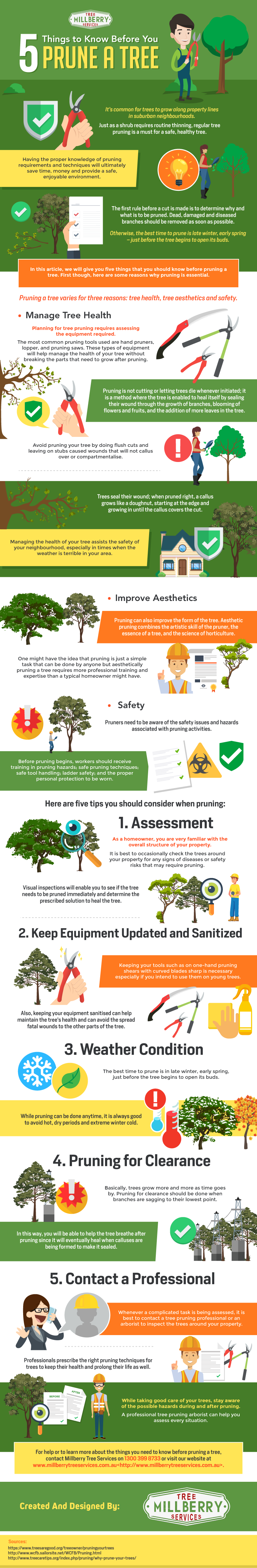 The Importance of Pruning: The 5-Point List for Tree Pruning - Infographic