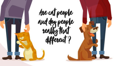 Canine Vs Feline: Which One Are You? - Infographic