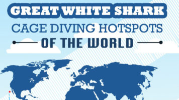 Guide to the World's Best Great White Shark Hotspots - Infographic