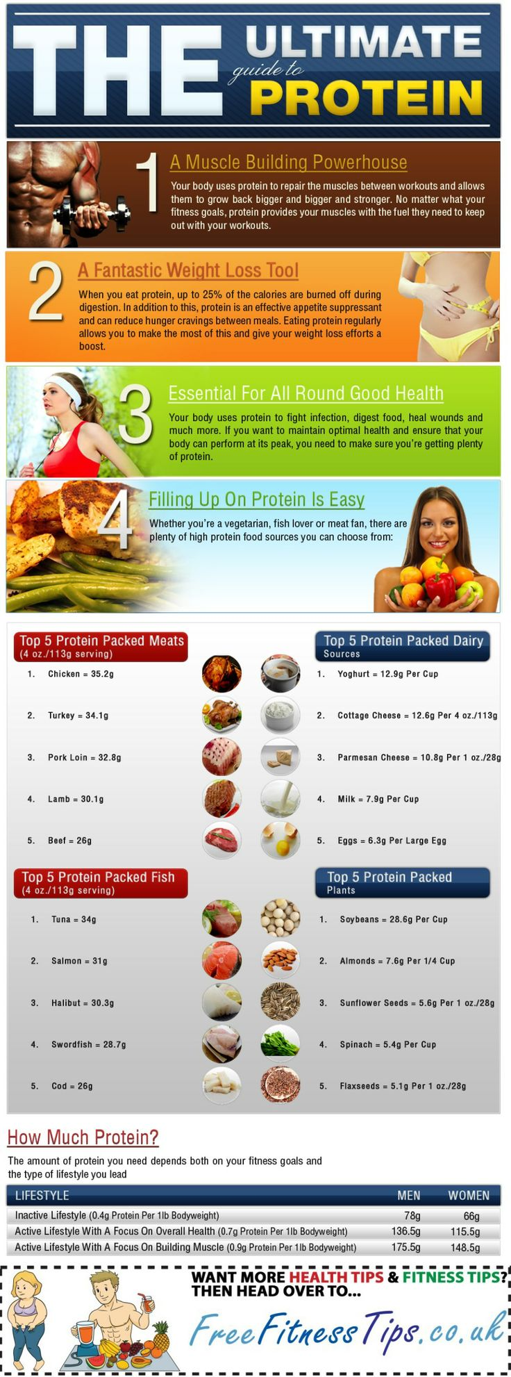 The Ultimate Building Block: Protein's Many Benefits - Infographic