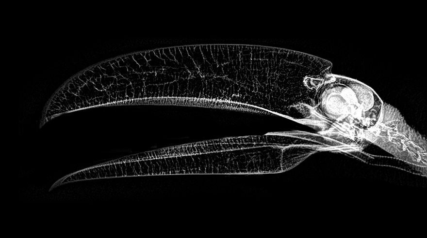 This Is What Animal X-Rays Look Like