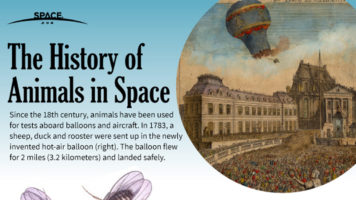 Animals in Space: Stories of Those Who Made It Possible for Us! - Infographic
