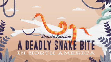 How to Identify Poisonous Snakes and Survive Their Bite - Infographic