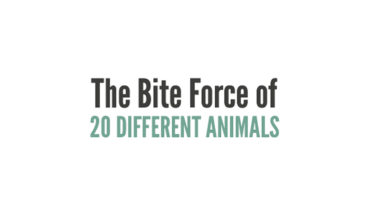 Understanding the Crush Bite Force of 20 Animals - Infographic