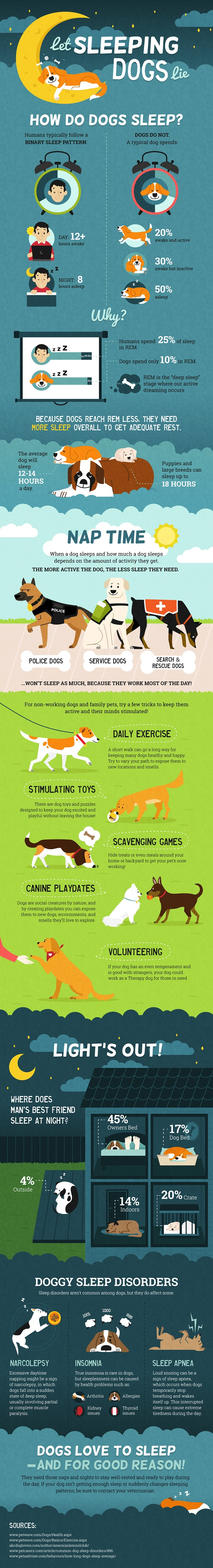 Why Dogs Need More Sleep than Humans - Infographic
