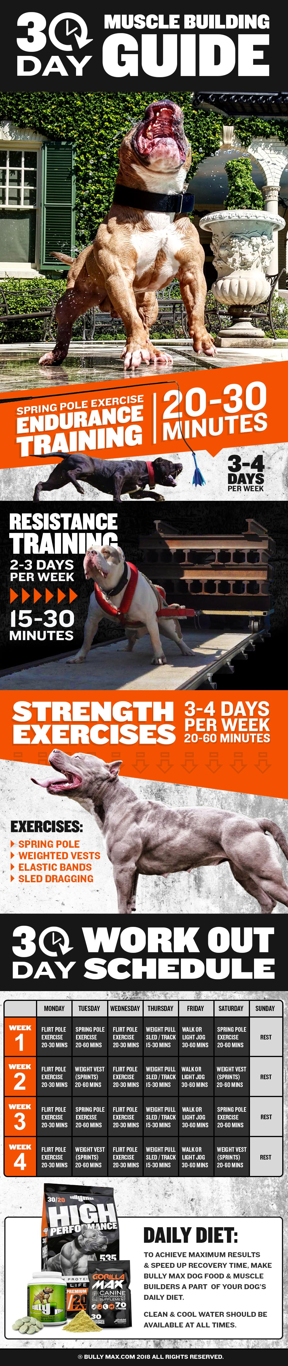 How to Build Your Dogs Muscles in 30 Days - Infographic