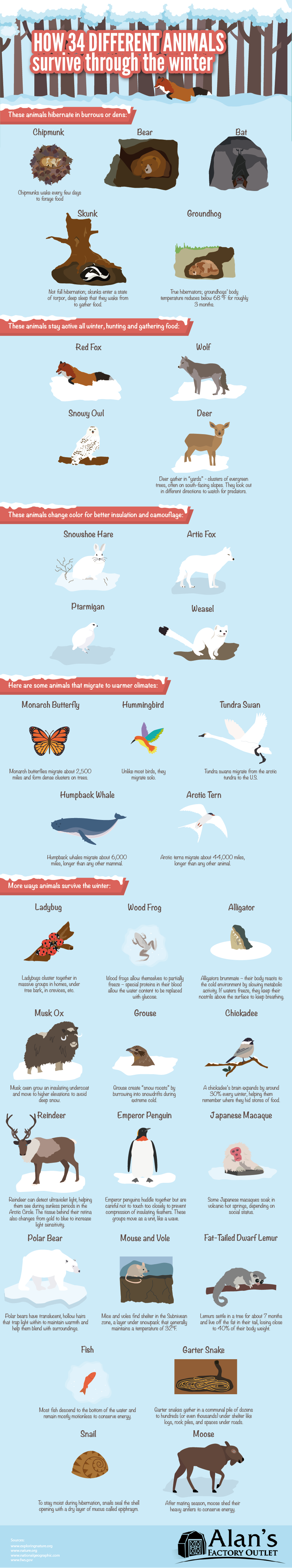 Survival Instinct: The Hibernation Process of 34 Animals, Birds and Insects - Infographic