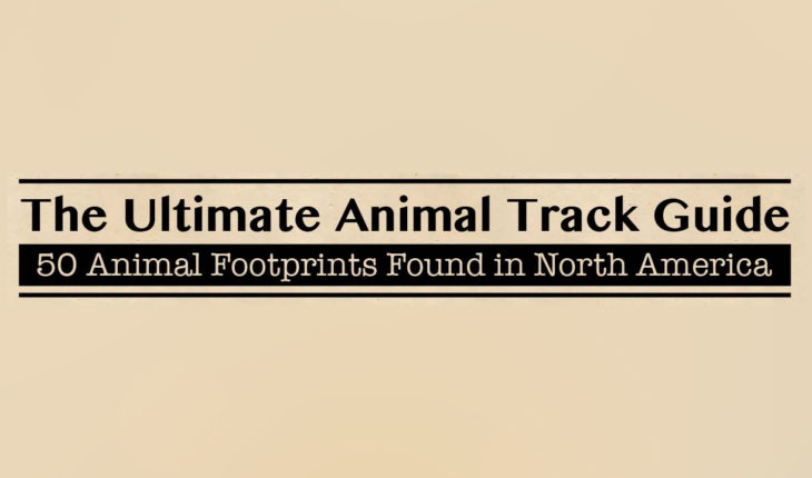 How to Recognize and Track 50 Animal and Bird Species in North America - Infographic