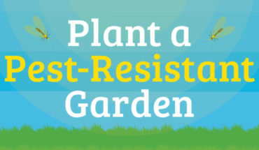 How to Create a Non-Toxic, Pest-Resistant Garden - Infographic