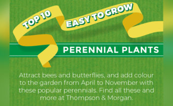 Top of the Perennials: The 10 Best Perennials - Infographic