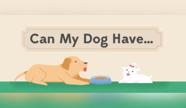 Human Foods on the Good-for-Doggie Scale - Infographic
