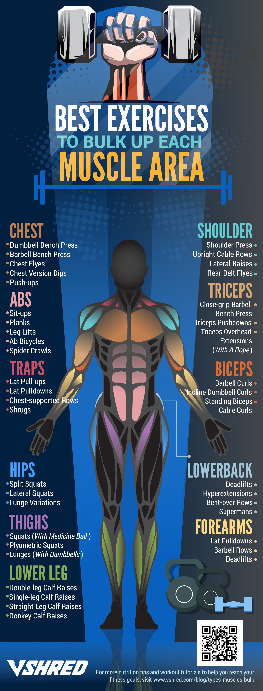 The Systematic Approach to Muscle Building - Infographic