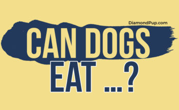 The Comprehensive Guide to Safe and Unsafe Human Foods for Dogs - Infographic