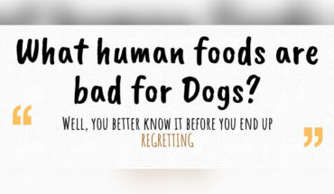 8 Human Foods That Are Pure Toxin for Dogs - Infographic